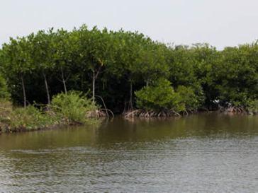 arbre_ecologique-ethique